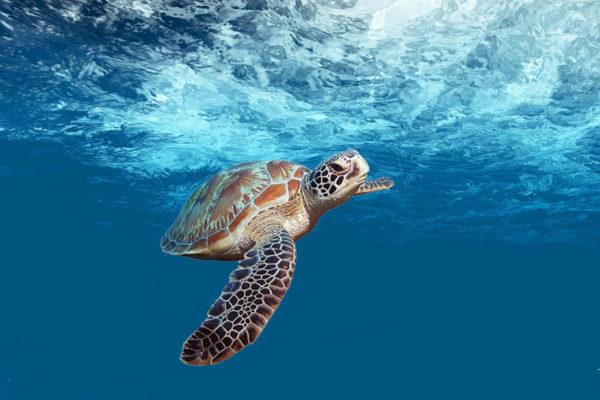 turtle-4032570_1920