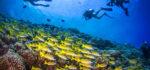 【學潛水】10個 考潛水牌 的事前準備